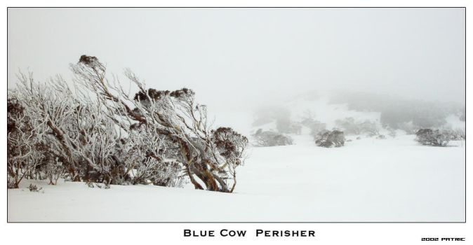 Blue Cow by mokar