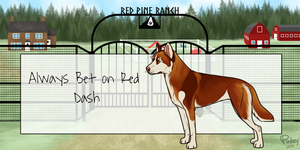 RPR's Always Bet on Red by RedPineRanch