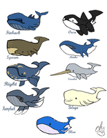 Wailord Variations