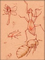 Insect Study 4 by LordMaru4U