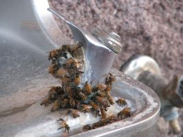 00173 - Wasps Swarming Drinking Fountain by emstock