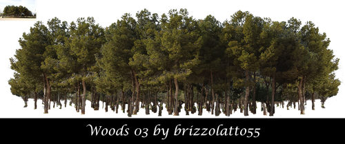 Woods 03 by Brizzolatto55
