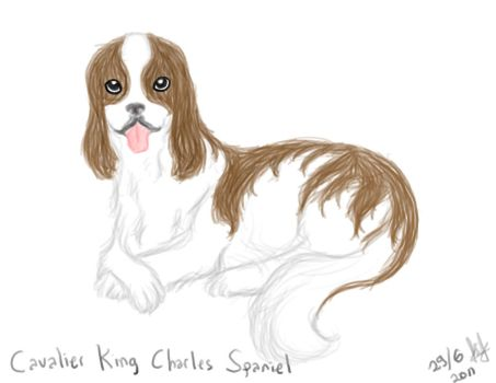 Cavalier King Charles Spaniel by RuzMustang