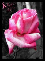 Think Pink - Rose by Jenna-Rose
