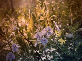 Morning blue  flowers by aby192