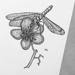 Dragonfly // pen drawing by MajesticPaula