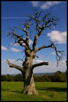 Old Dead Tree by Hitomii