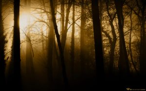 Forest Rays II by l8