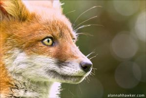 Up Close by Alannah-Hawker