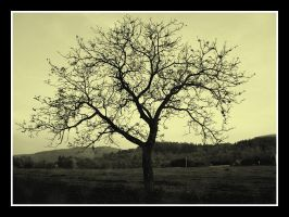 TREE ONE by agif-aisa