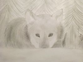 Wolf hiding behind a snowhill by Pedro-girl