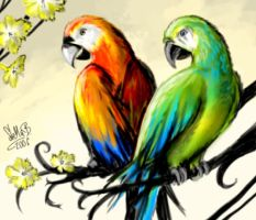 Parrots by StellaB