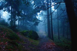 Forrest in fog by LoveForDetails