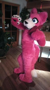 fursuit species: cat  name: Angel by KittyBlossomStyle