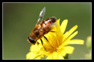 Yellow Flower Visitor 2 by Keith-Killer