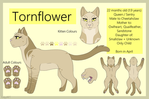 Tornflower Reference Sheet - Official by TACOBELLABAE