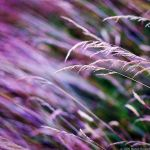 The Fields Of Color by MarcoHeisler