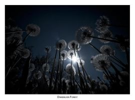 Dandelion Forest by AndreasResch