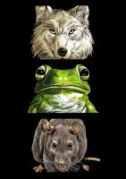 Animal Heads by JustinWyatt