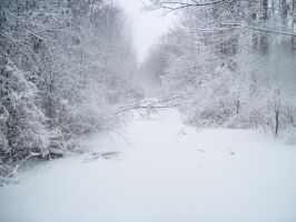 Forest Path in Winter 11 by Martut