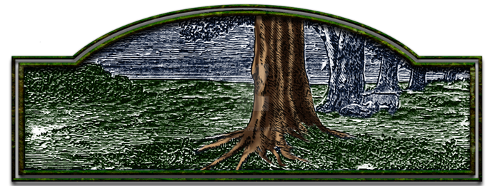 Druid-enclaves-hdr-1 by knottyprof