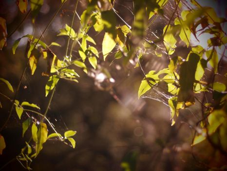 Web of light by InkBlotted