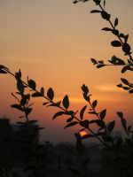 Tree branchs in sunset 4 by Magdyas