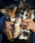 kittens by theycallmespitfire