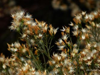 Grand Canyons .........wild flowers 2 by gintautegitte69