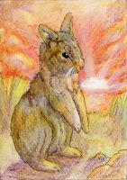 ACEO: PoonieFox by SaQe