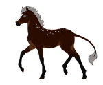 N2998 Padro Foal Design by casinuba