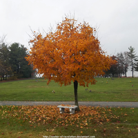 Autumn maple with bench by NickACJones