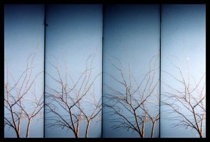 trees in lomo by iamshutterhappy