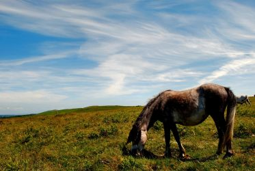 Horse on the moor by Deus-est-femina