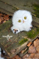 Owl Sowush 1 by Flicker-Dolls