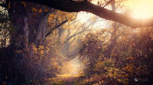 Way Out by ildiko-neer
