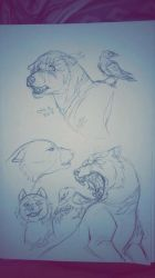 Cerby Sketches by CH-Travels