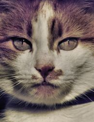 cleopatra's cat by deliberated
