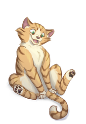 Cat by Winggal