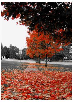 Canadian Autumn by thirtynine