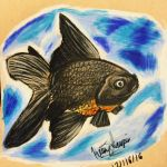 Black Moor Goldfish Drawing by Sniffy678578