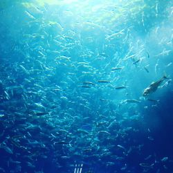 School of Fish by thyalla