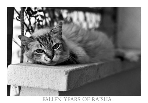 Fallen years of Raisha by Seizen
