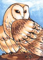 ACEO Barn Owl by armaina