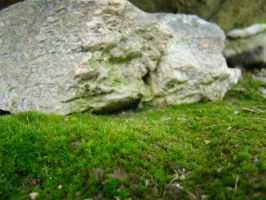 Moss Macro Stock 1 by Equide--Designs