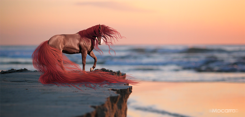 Just a horse manip... by Mocarro