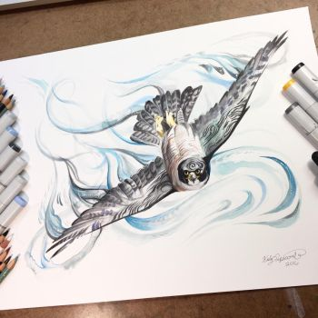 Peregrine Falcon by Lucky978