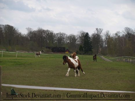 Stock: Canter by ImpactStock