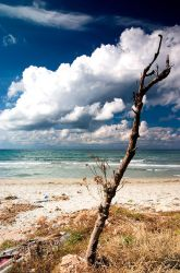 A tree, standing at the beach by AntonioAndrosiglio