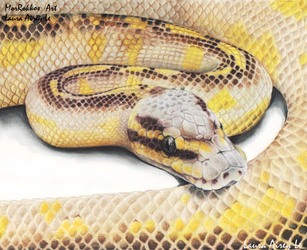 Pastel Highway Ball Python by Gray-Ghost-Creations